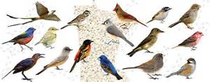 birding in minnesota a guide for the backyard bird