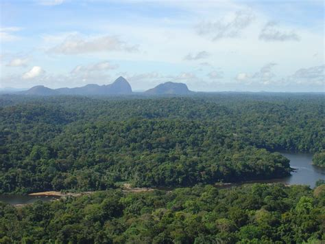 panoramio photo of view over rain forest from tebu top
