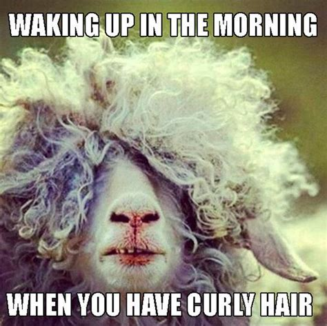 Crazy Hair Meme - 22 memes that are way too real for people with curly hair