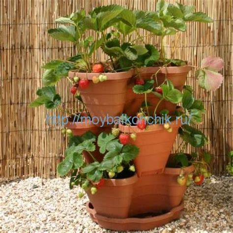 strawberry planter ideas
