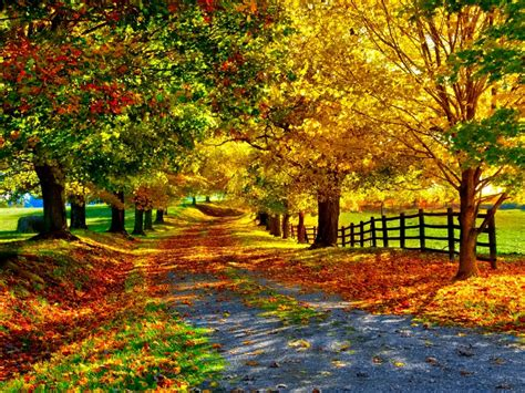 google images of fall fall wallpaper cynthia selahblue cynti19 wallpaper