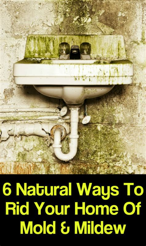 best way to get rid of mould in bathroom 6 natural ways to rid your home of mold mildew