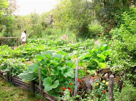 self sufficient vegetable garden homesteaders vs preppers what s the difference