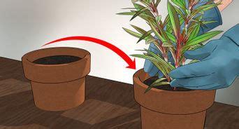 come uccidere le formiche volanti 4 modi per liberarsi dei tafani wikihow