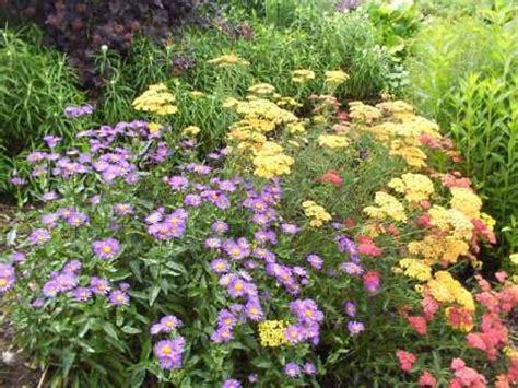 Garten Dicht Pflanzen by Stauden Richtig Pflanzen Winterharte Stauden F 252 R