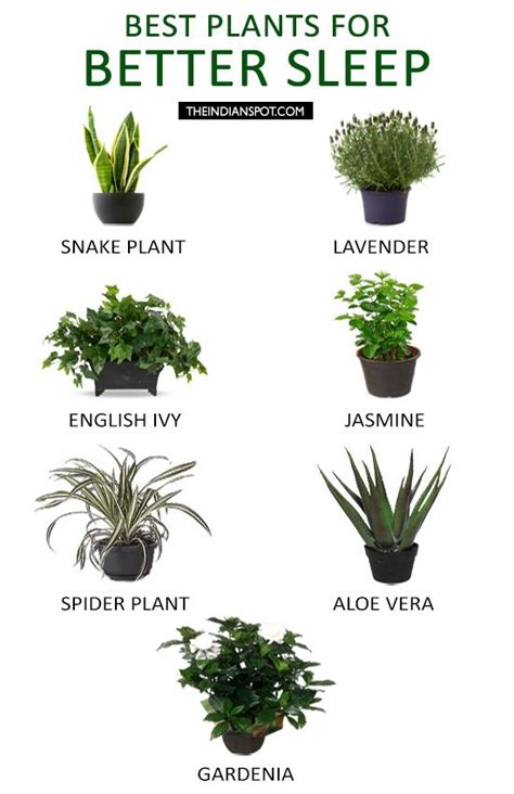 where to put plants in house best 25 bedroom plants ideas on pinterest bedroom plants decor best plants for bedroom and