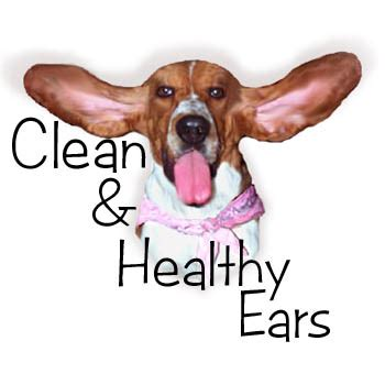 black ear wax in dogs ear infection thursday thoughts dogs ear wax