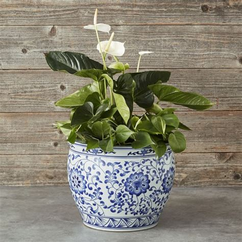Blue And White Planters Large by Blue White Ceramic Planter Large Williams Sonoma