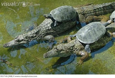 amazon river animals amazon river animal life amazon river turtles perched on