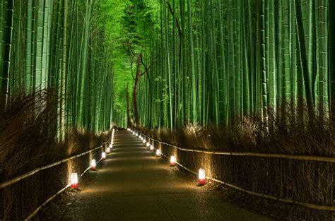 imagenes bambu japones el maravilloso bosque de bamb 250 de sagano arashiyama ojo
