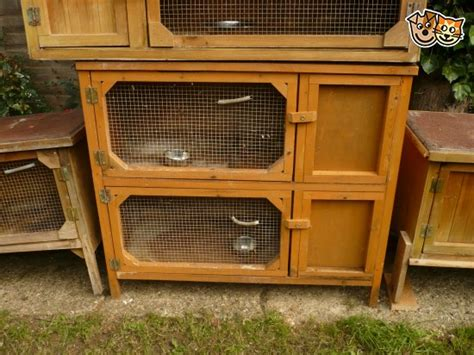 Rabbit Hutches For Sale In Essex a variety of rabbit hutches for sale chelmsford essex pets4homes