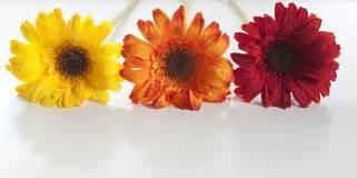 stock fiori artificiali vasi da fiori vasi da fiori di plastica fotografia stock