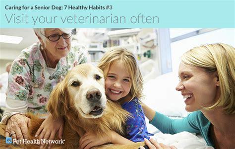 caring   senior dog  healthy habits