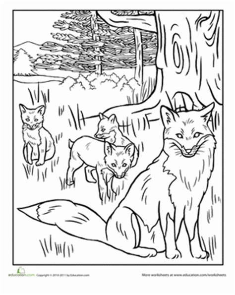 red fox coloring pages realistic coloring pages