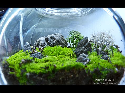 trying terrarium jar can i import these moss amp lichen