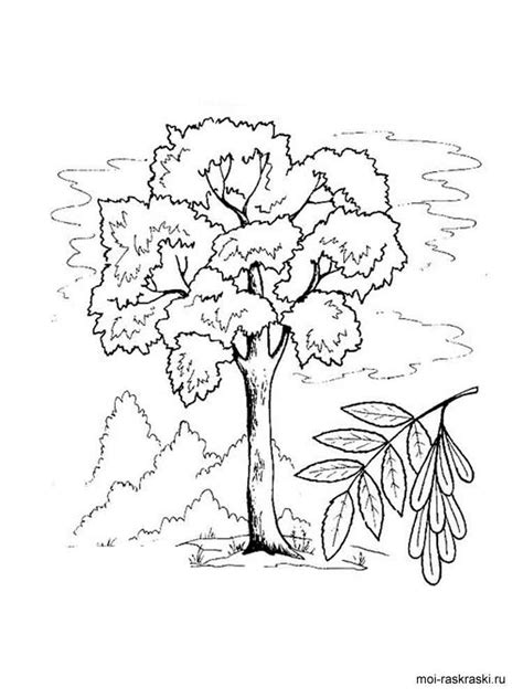 Ash Leaf Coloring Page Images | ash leaf coloring page coloring coloring pages