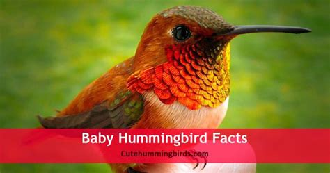 cute humming birds archives cute humming birds