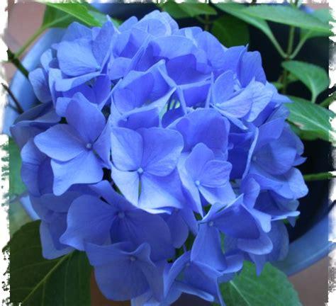 imagenes flores mas lindas todo mundo las flores mas hermosas del mundo taringa