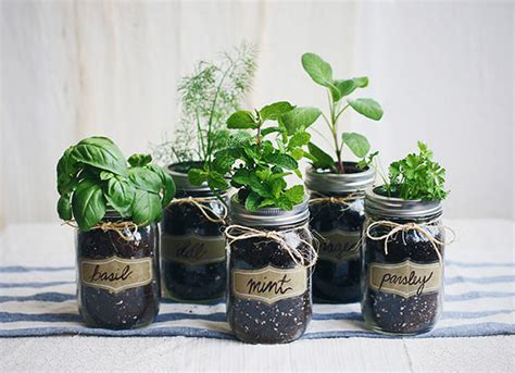 in home herb garden diy mason jar gardens home herb garden