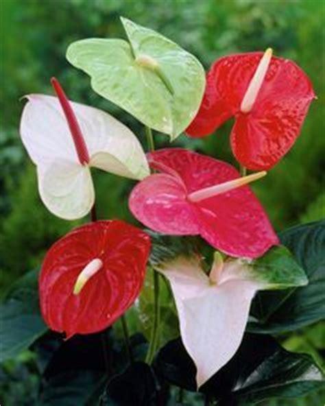 Zimmerpflanzen Versand Bestellen 74 by 250 Best Images About Zimmerpflanzen Auf