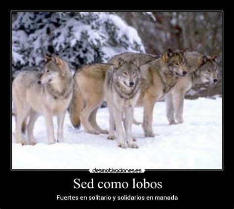 imagenes de leones solitarios sed como lobos desmotivaciones