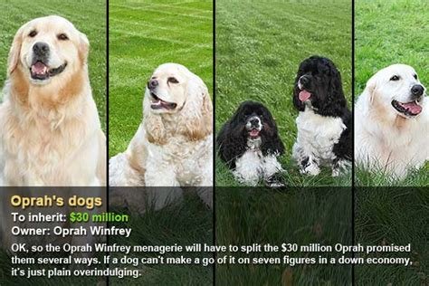 oprah s dogs who are the worlds richest pets bankrate