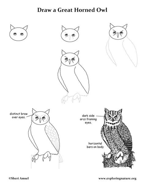how to draw doodle owl how to draw an owl for step by step