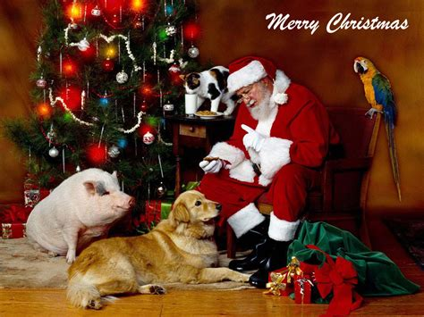 christmas wallpaper with animals christmas santa and animals wallpaper friends in need