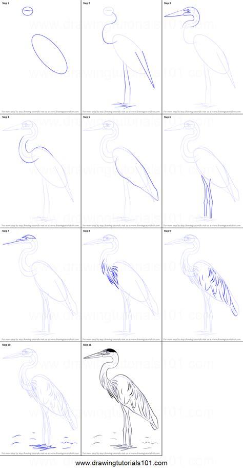 how to draw a for how to draw a great blue heron printable step by step drawing sheet