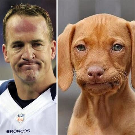 Manning Face Meme - barkbox on twitter quot interception peyton manning ruhroh
