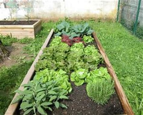 lavorare come giardiniere sentieri e bordure nell orto dimensionare correttamente