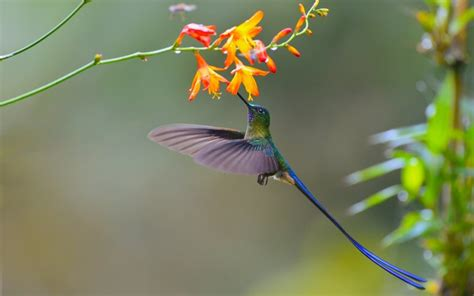 can i install hummingbird flying on a christmas tree desktop wallpaper small bird colorful hummingbird fly flowers hd image picture