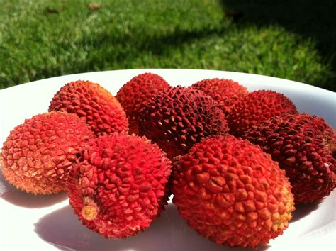 lychee fruit 301 moved permanently