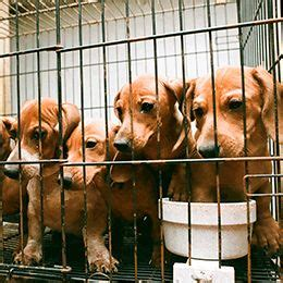 define puppy mill 25 best ideas about puppy mills on puppy mill puppy mill rescue and