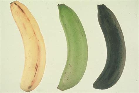 chambre froide pour fruits et l馮umes temprature chambre froide fruits et lgumes la