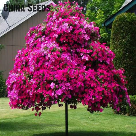 Buy A Planter Online Buy Wholesale Petunia Tree From China Petunia Tree