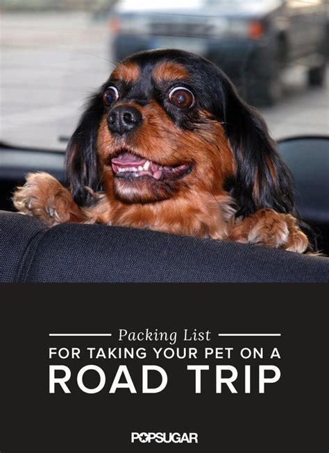 Book Your Travel To Dreamland Pet Pet Pet Product by 103 Best On The Road Pet Travel Tips Images On