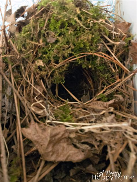 bird nest in a shoe a pretty happy home