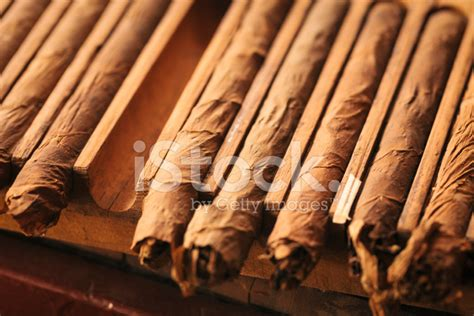 Handmade Cuban Cigars - handmade cuban cigars drying stock photos freeimages