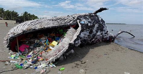 News Roundup Greener Air Con Whaling Ship On And More by Yet Another Dead Whale Is Grave Reminder Of Our