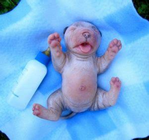newborn puppy diarrhea a 14 point checklist for newborn puppies pooch portal