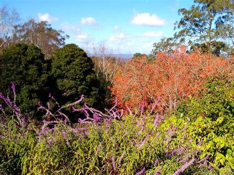 Mt Lofty Botanic Garden Mount Lofty Botanic Garden S 40th Birthday Adelaide