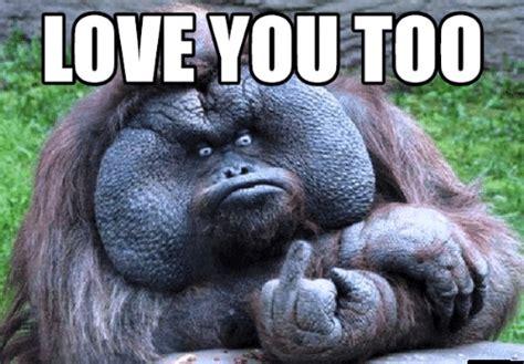 Love You Too Meme - love you meme have a good day meme funny love meme gm memes