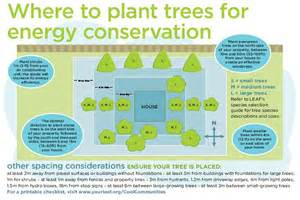 Backyard Trees And Shrubs Conserving Energy The Benefits Of Shrubs Local