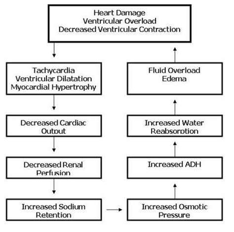 congestive heart failure chf nursing care plan management congestive heart failure chf nursing care plan management