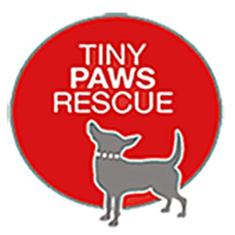 tiny paws small rescue adopt a tiny breed from tiny paws rescue shelter tx