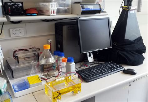 lab bench electrophoresis lab bench electrophoresis 100 lab bench electrophoresis