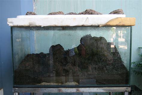 Karpet Carakter Yg Murah Meriah menanam moss dengan sistem kering start method dsm
