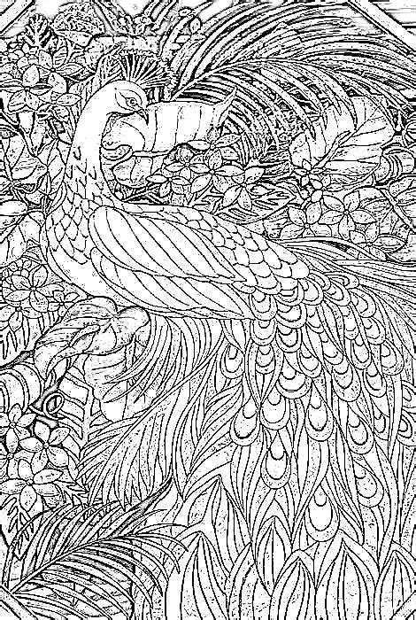 animal coloring pages peacock peacock coloring pages pinterest coloring glasses