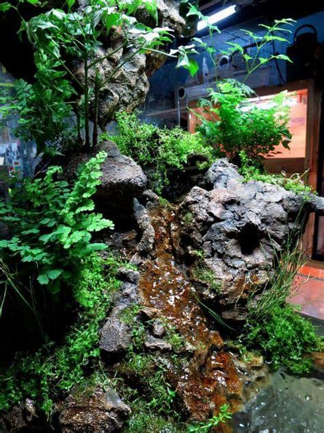 images  leopard gecko  pinterest vivarium